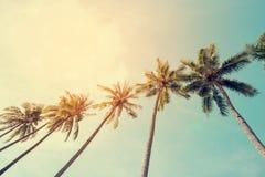 在海边热带海岸的可可椰子树 免版税库存照片