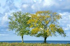 在海边的二个结构树 免版税库存照片