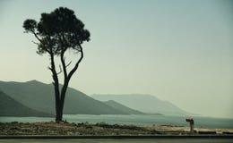 在海边的偏僻的树 免版税库存照片