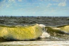 在海边的大veawe 库存照片