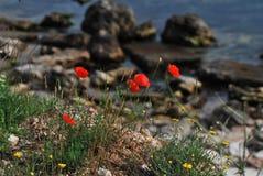 在海边的春天 免版税库存图片