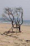 在海边的树 库存照片