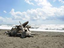 在海边的漂流木头 免版税库存图片