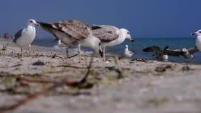 在海边的鸟 股票视频