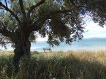 在海边附近的一条长凳 库存图片
