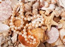 在海运壳背景的珍珠nacklace 库存照片