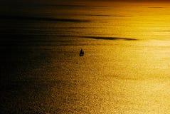 在海运日落之上 免版税图库摄影