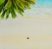 在海运晴朗的海滩的寄居蟹 免版税库存图片