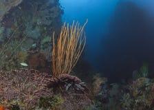 在海里的峡谷的深珊瑚礁 库存照片