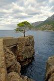 在海附近的杉木 免版税图库摄影