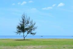 在海附近的杉树反对蓝天背景 图库摄影