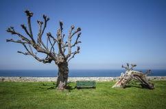 在海附近的树 库存照片
