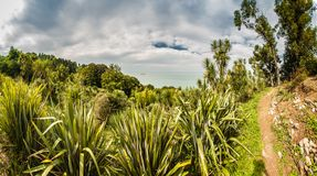 在海附近的植物的公园 免版税库存图片