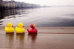 在海附近的橡胶鸭子 库存图片