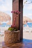 在海附近的美妙的花仙人掌 免版税库存照片