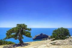在海附近的老杜松山的 库存照片