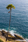在海附近的Ccoconut棕榈 库存图片