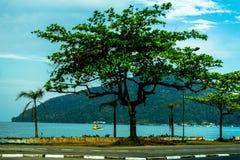 在海附近的Tipical热带树 免版税库存图片
