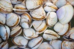 在海鲜市场摊位的蛤蜊在香港,中国 图库摄影