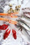 在海鲜的冰市场 免版税库存图片