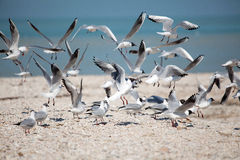 在海鸥的海滩飞行 图库摄影