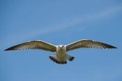 在海鸥的飞行湖 免版税库存图片