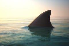 在海洋水上的鲨鱼飞翅 免版税图库摄影