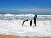 在海滩与白色软的海泡沫波浪和棕色沙子的死的树桩在晴天蓝天的海滩 免版税图库摄影