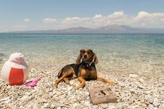 在海滩允许的狗 与读新闻的狗佩带的太阳镜的一张滑稽的看的画象 免版税图库摄影