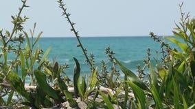 在海滩关闭的自然植被 股票视频