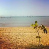 在海滩前面的一点树在磁岛,汤斯维尔澳大利亚 免版税库存照片