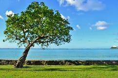 在海洋前面的树 免版税图库摄影