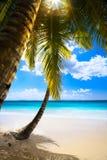 在海滩加勒比岛,塞舌尔群岛上的艺术日落 库存图片