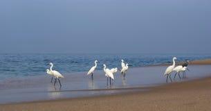 在海洋含沙南部附近使苍鹭印度喀拉拉靠岸 喀拉拉,南印度 免版税图库摄影