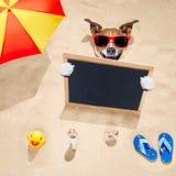 在海滩和横幅的狗 库存图片
