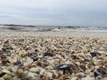 在海滩和浮体的被弄脏的壳在波浪 免版税库存图片