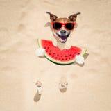 在海滩和西瓜的狗 图库摄影