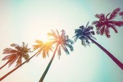 在海滩和阳光的可可椰子树与葡萄酒定了调子effec 免版税库存照片