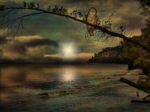 在海滩场面的猫头鹰 免版税图库摄影