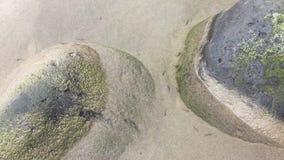在海滩水坑的鱼苗 影视素材