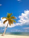 在海滩离子基韦斯特岛佛罗里达的棕榈树 库存照片