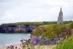 在海滩峭壁和城堡的蓟 免版税图库摄影