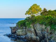 在海洋峭壁的风景树 免版税库存图片