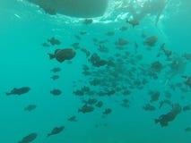 在海洋捕鱼下 免版税库存照片