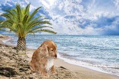 在海滩放弃的狗 库存图片