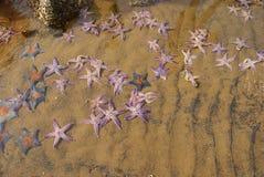 在海滩放置的海星 免版税库存图片