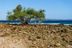 在海滩旁边的一棵树 图库摄影