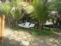 在海滩旅馆里面的植被 图库摄影