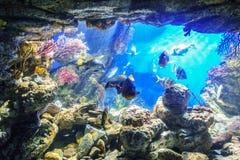 在海洋水族馆的异乎寻常的鱼 库存照片