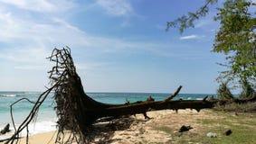 在海滩普吉岛镇泰国的下落的树 图库摄影